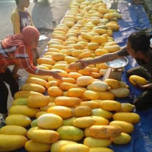 Aktieitas Pedagang Timun Suri Di Karawang (Foto: adt)
